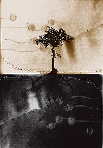To the roots © 2004-2007 by frozen sky