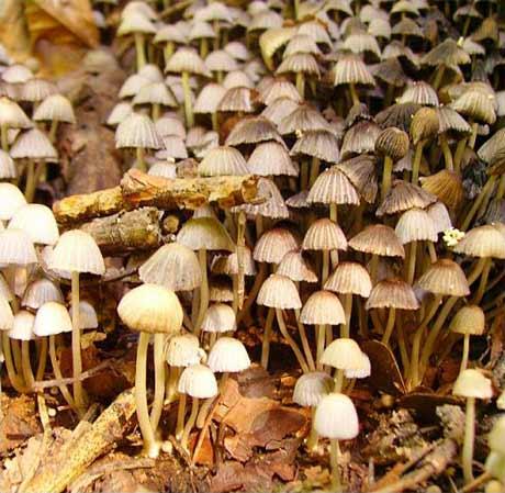 Mushrooms - © 2006-2007 maria-ana-m@deviantart.com