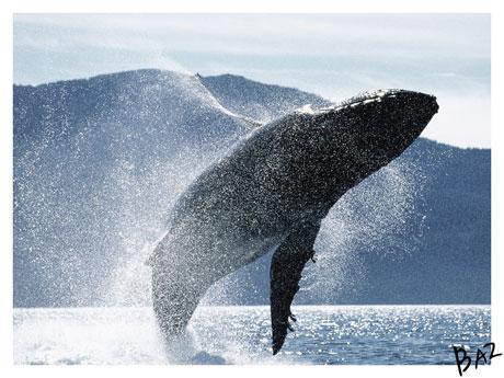 Whale - © by basgitaar@deviantart.com