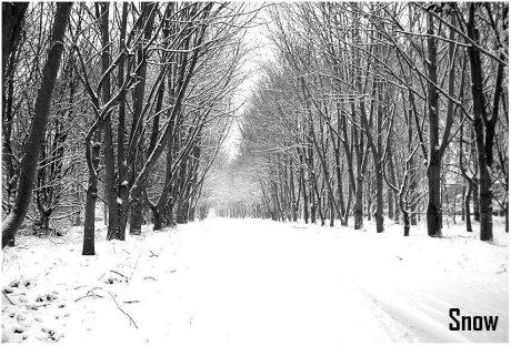 Snow • © by Jodmiester@deviantart.com