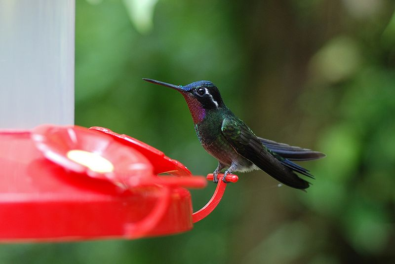 Manteles Kolibri