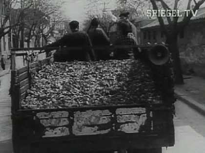 Abtransport getöteter Spatzen in China zu Zeiten Maos